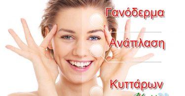 ganoderma-kai-anaplasi-kyttarwn