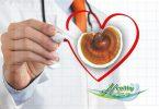 ganoderma-dosologia