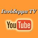 ganoderma-tv.jpg